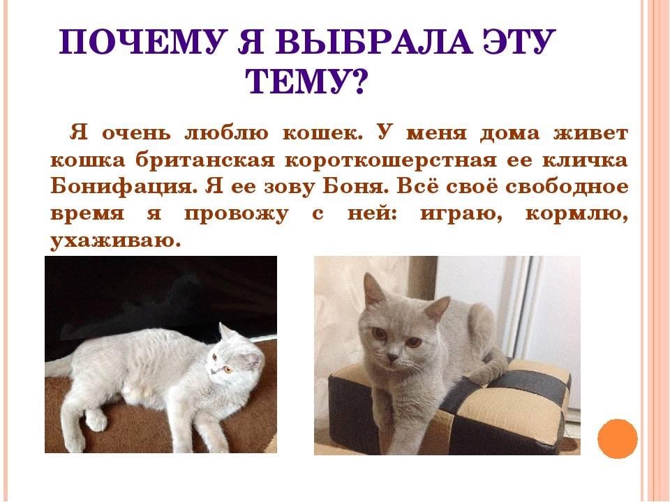 Как правильно сделать укол кошке в холку и внутримышечно в домашних условиях