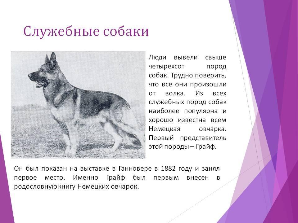 Правила содержания и дрессировки служебных пород собак