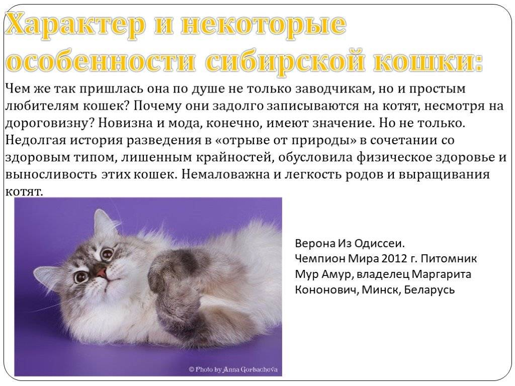Анатолийская кошка: аристократка уличного происхождения