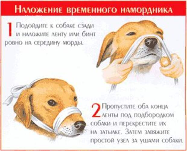 Сколько лет живут собаки в домашних условиях и как продлить жизнь