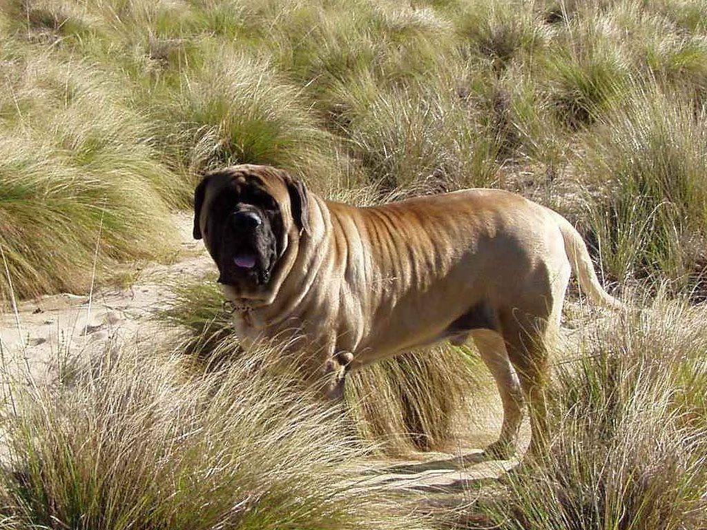 Самые красивые собаки в мире   фото