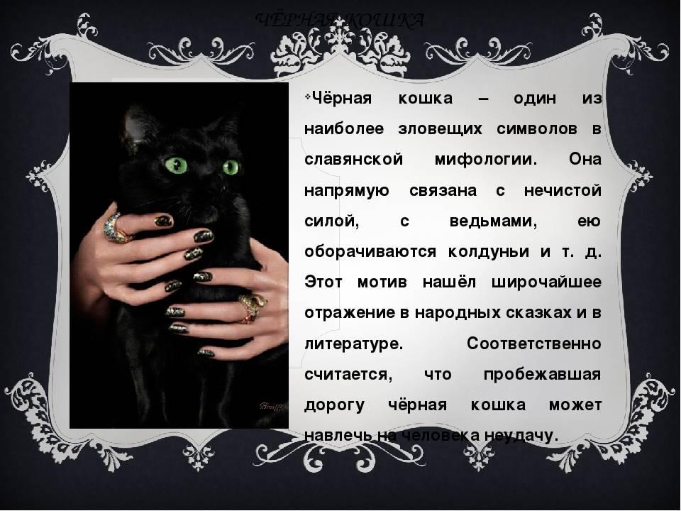 Чего ожидать согласно приметам, если в дом пришёл чужой кот?