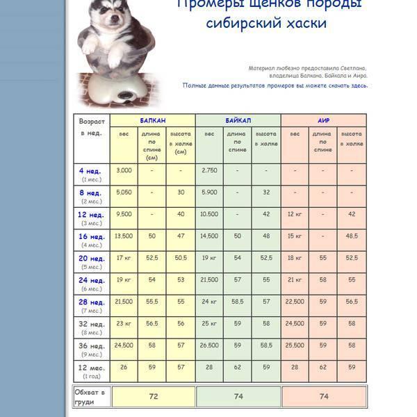 Развитие и набор веса щенков породы лабрадор по месяцам и взрослых собак
