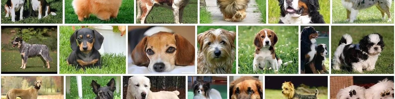 Собаки для новичков — выбор породы, рейтинг подходящих
