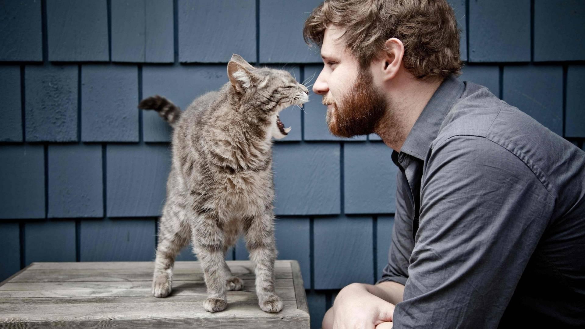 Кот стал агрессивным, нападает на хозяйку: почему кошка шипит, кидается, кусает хозяев без причины?