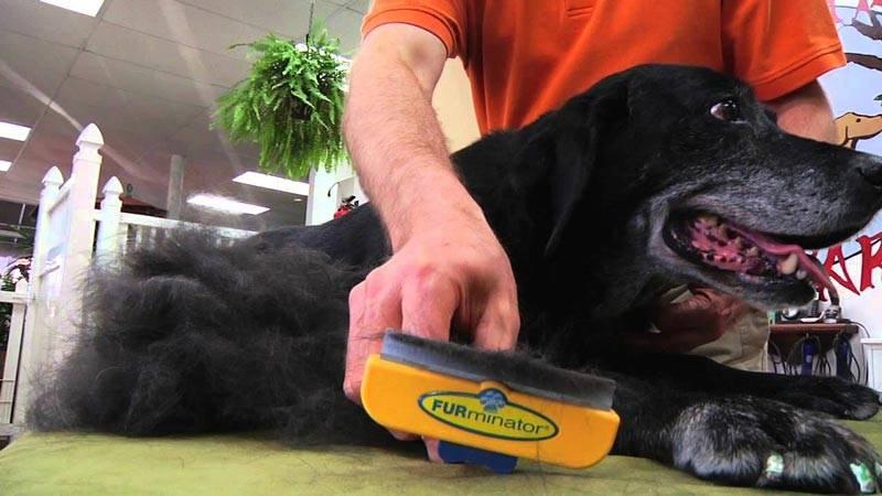 Что такое фурминаторы для собак: модели, правила использования и фото