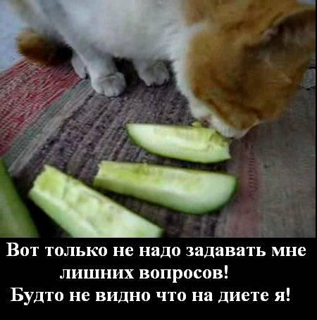 Почему коты и кошки боятся огурцов?