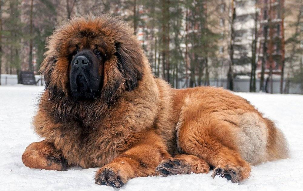 Породы самых красивых собак: список пород, фото и описание,