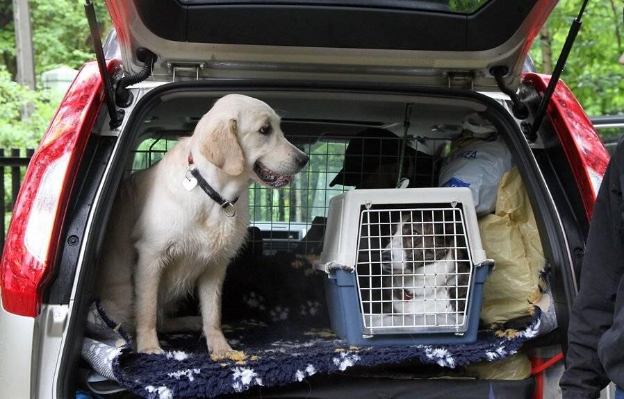 Как перевозить собаку и кошку в машине