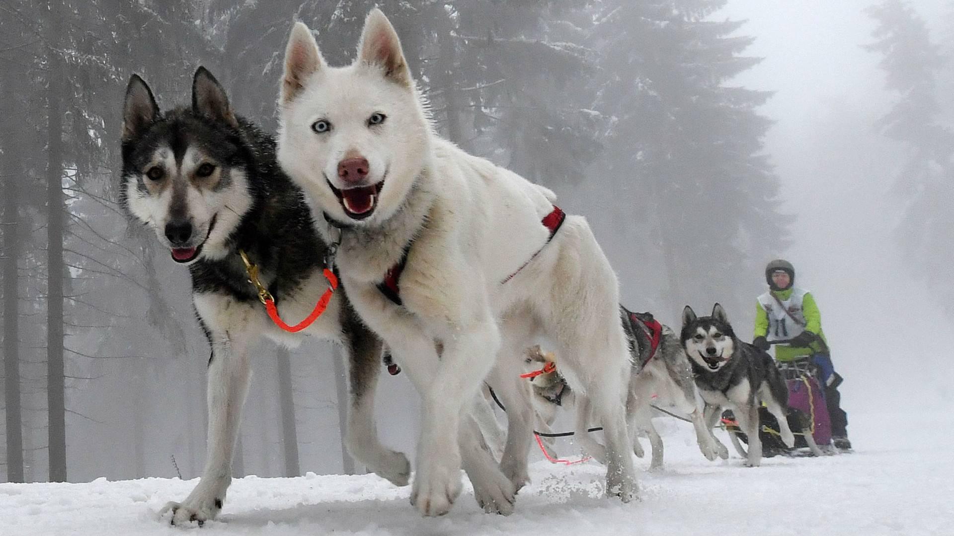 Топ-35 самых добрых собак