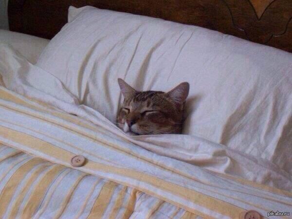 Почему кошка писает на постель?