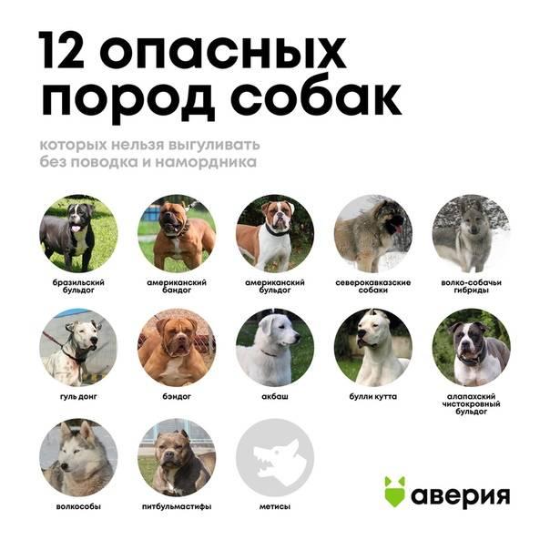 Выгул собак без намордника и поводка, статья коап – есть ли такая, кто несет ответственность?