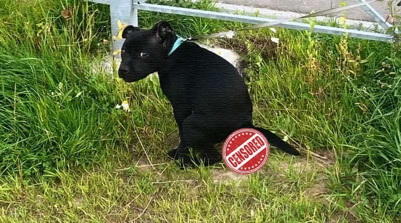 Ответственность за выгул собак без намордника с 2020 года