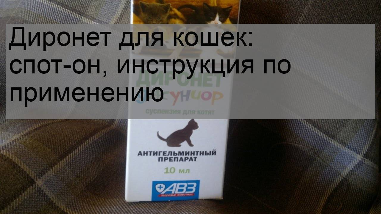 Диронет спот-он для котят - купить, цена и аналоги, инструкция по применению, отзывы в интернет ветаптеке добропесик
