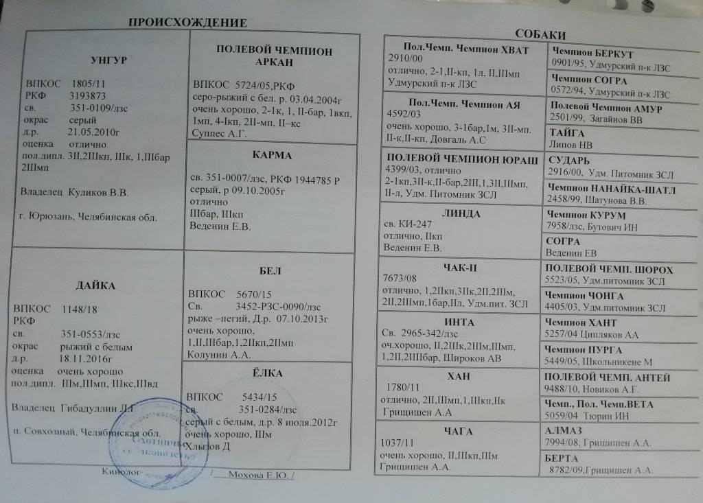 Западно-сибирская лайка: происхождение, характер и условия содержания