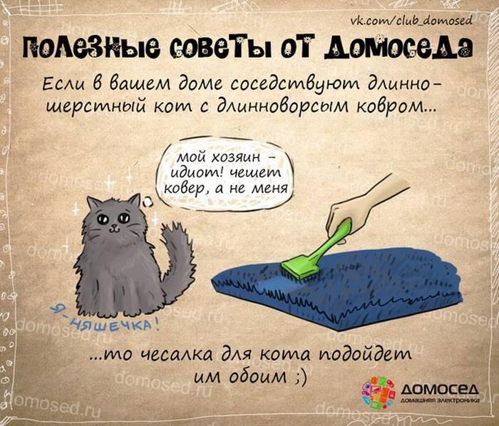 Простые способы заставить пожилую кошку двигаться
