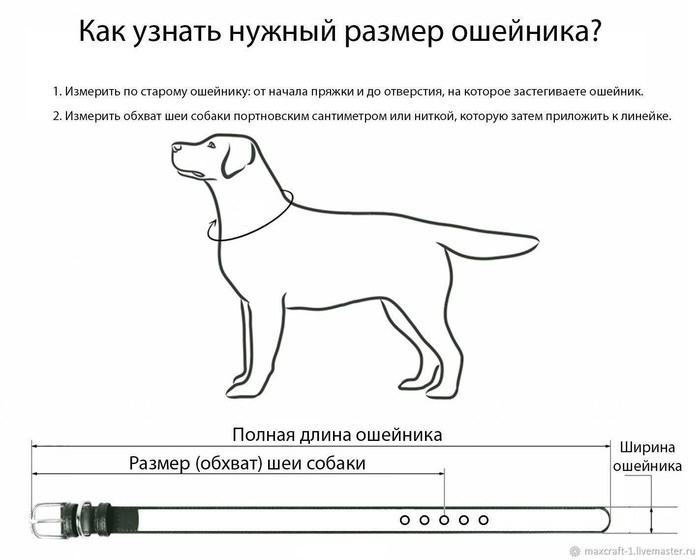 Защитный воротник для кошки: покупка или изготовление своими руками