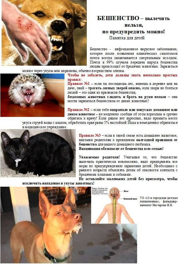Болезнь ауески у собак: симптомы, способы заражения и профилактика