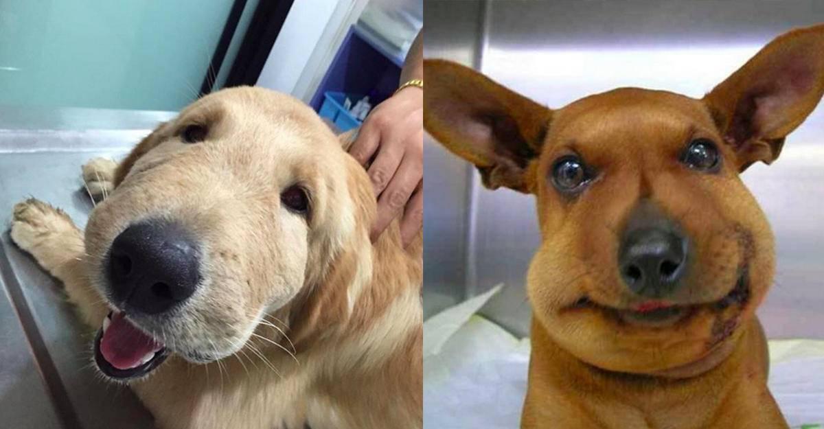 Собаку укусила оса (в горло, морду, нос, лапу): лечение аптечными медикаментами и народными средствами
