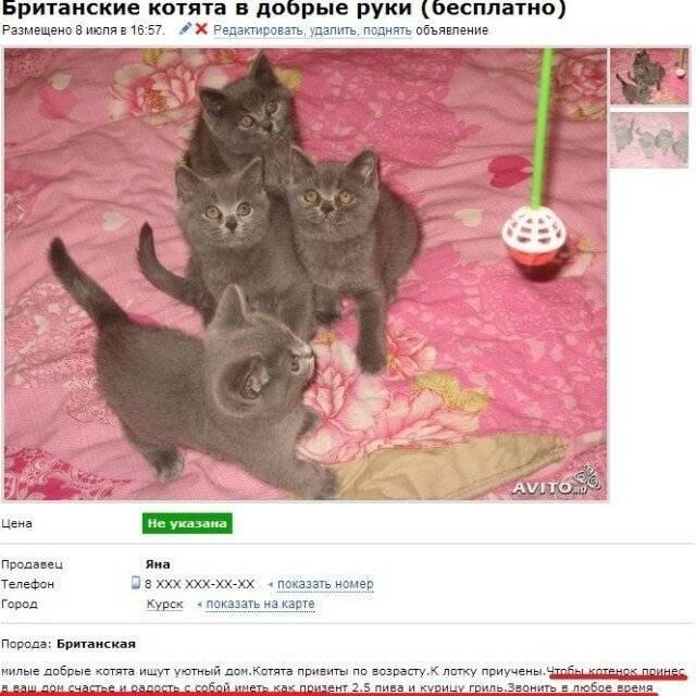 Объявления кошки, котята в москве: купить котят, продажа котят
