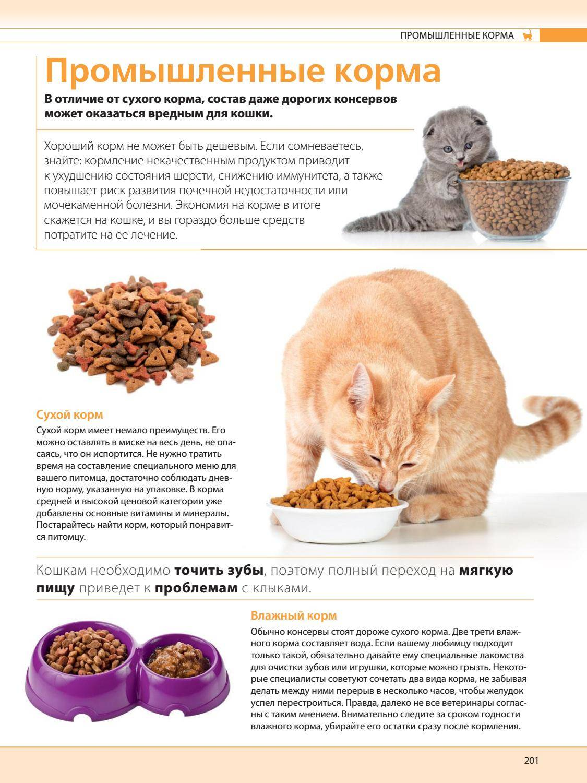 Сухой и влажный корм для кошек: из чего делают кошачий корм и вреден ли он?