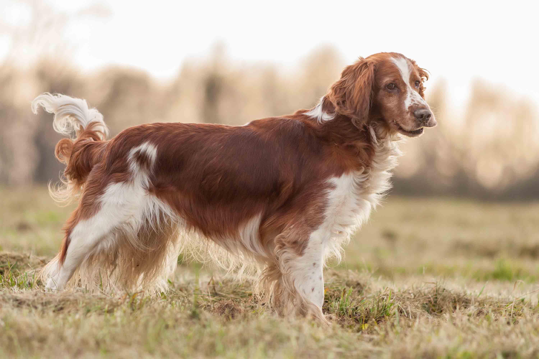 10 английских пород собак