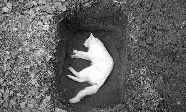Как пережить смерть любимого кота: советы, мнение психолога