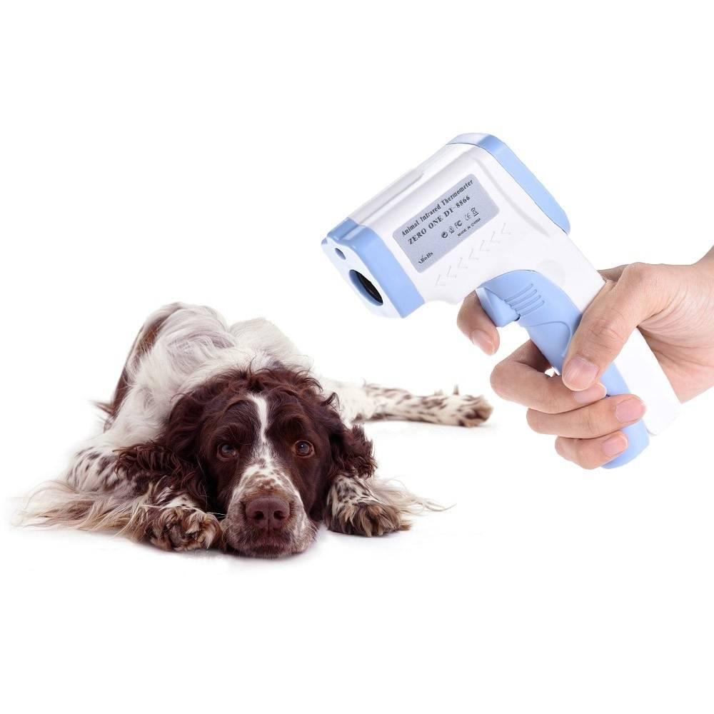 Температура тела у собаки: особенности измерения и нормальные показатели