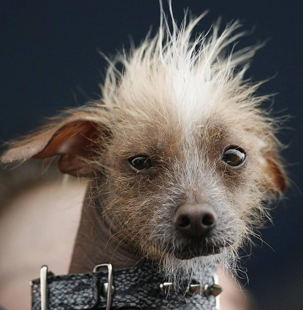 Породы собак с фотографиями и названиями