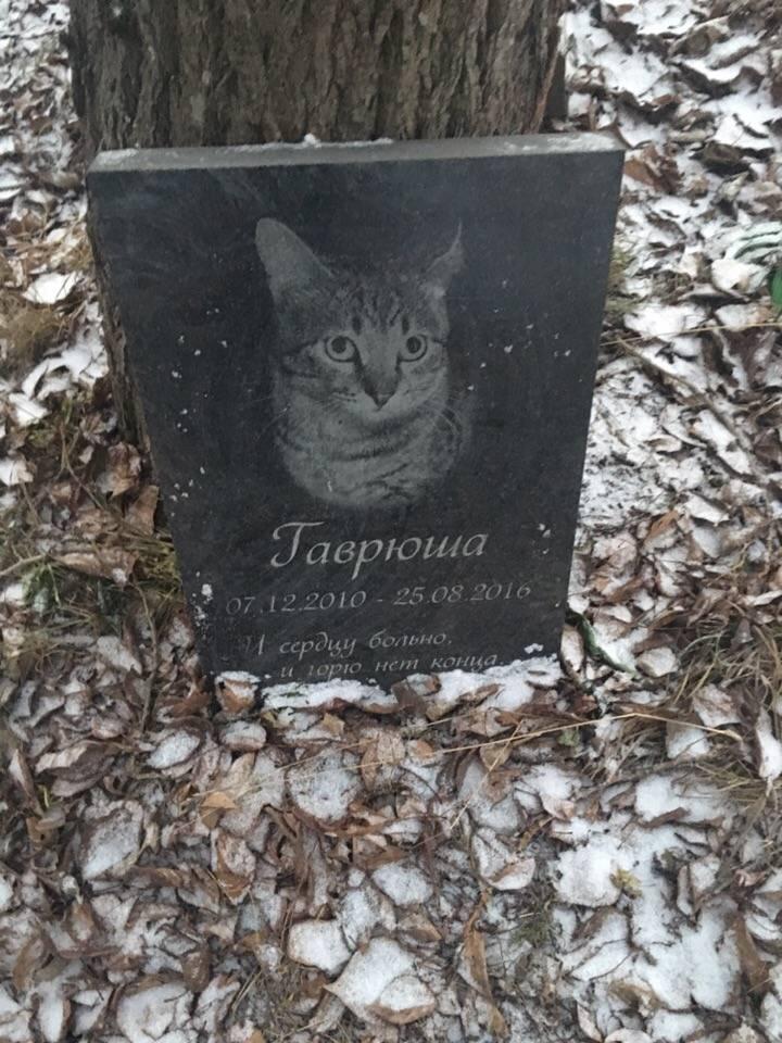 Как похоронить кошку зимой. где и как правильно похоронить кошку (деликатная тема) как похоронить кошку зимой самому - лечение