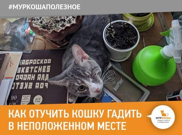 Как отучить кота гадить в неположенном месте: 4 проверенных способа