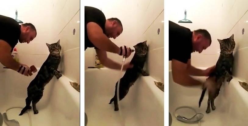 Как наказать кота, чтобы он понял?
