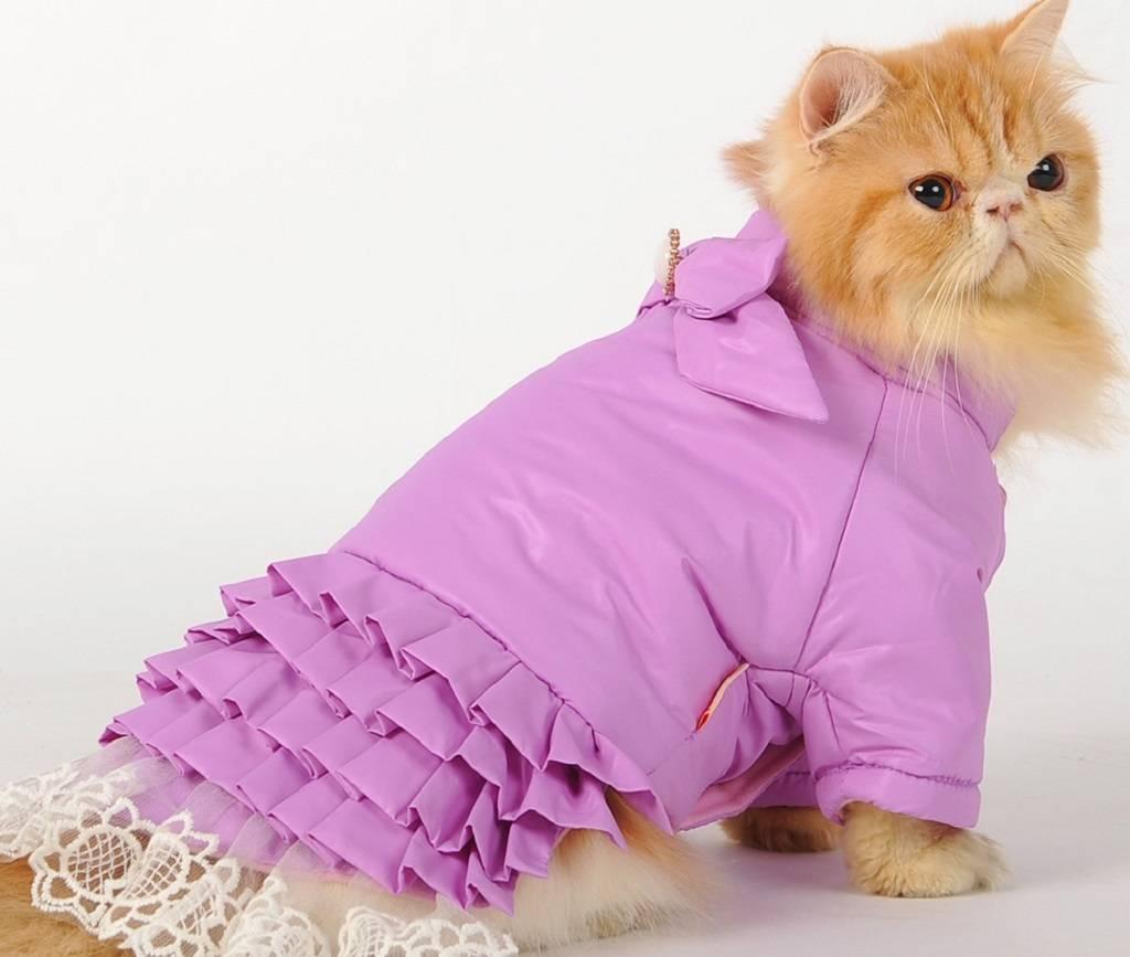 Одежда для кошек своими руками, выкройки одежды для кошек, платья - как сшить