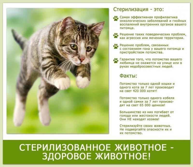 Средний срок жизни кота в домашних условиях после стерилизации, какие живут дольше