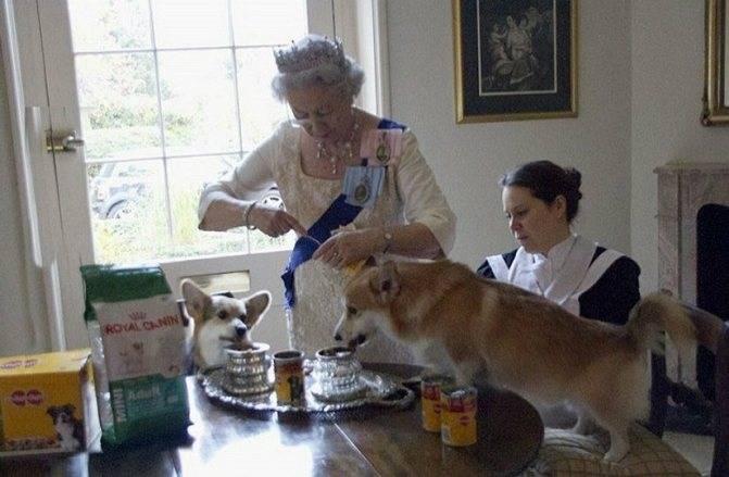 Как выбрать собаку, советы по выбору породы, плюсы и минусы пород.
