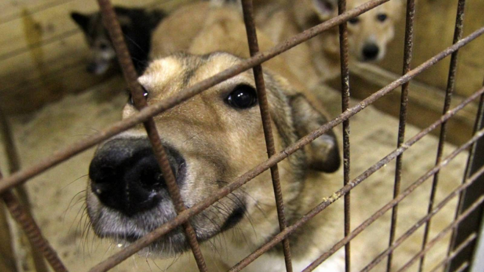 Четвероногий тендер: как защитники животных работают с госконтрактами