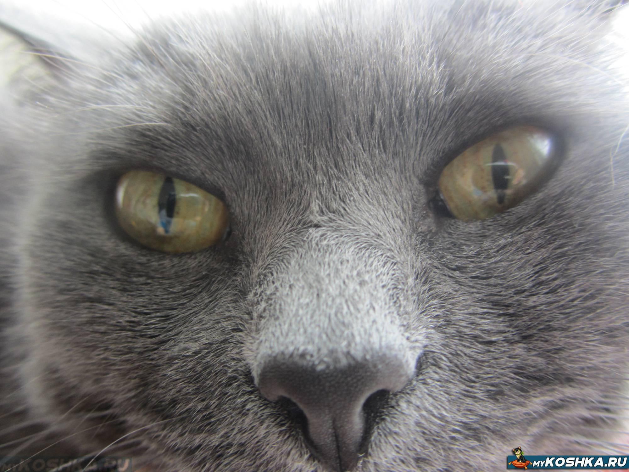 Какой нос должен быть у здорового кота кошки