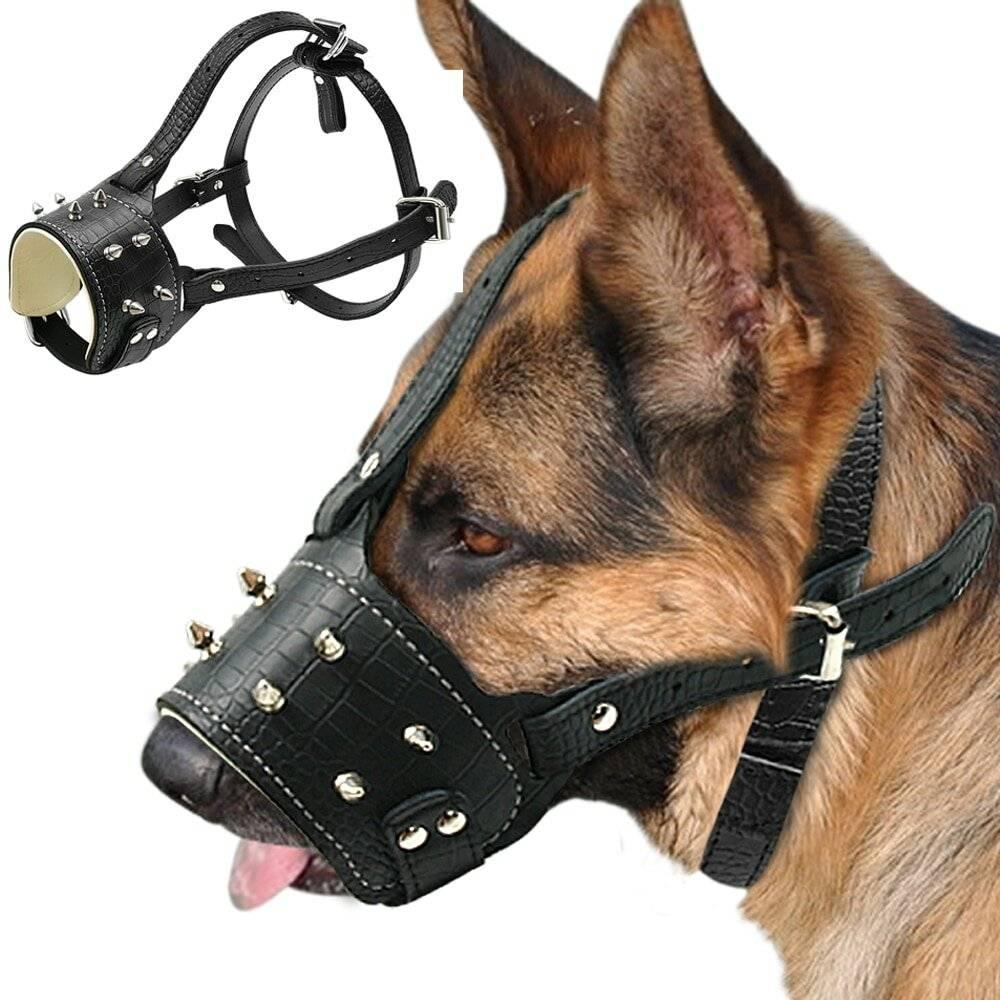 Строгий ошейник для собак