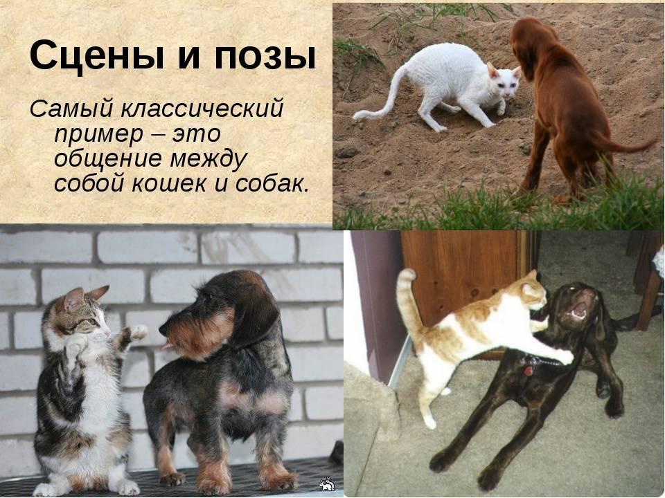 Как общаются собаки и что они могут нам «сказать»? почему важно понимать &quotязык&quot собак?