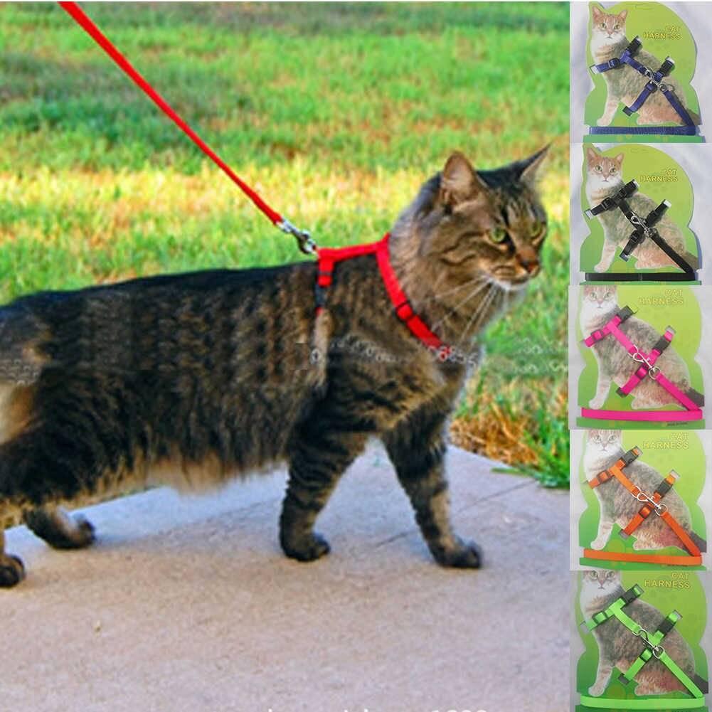 Шлейка для кошки своими руками - сделай сам - медиаплатформа миртесен
