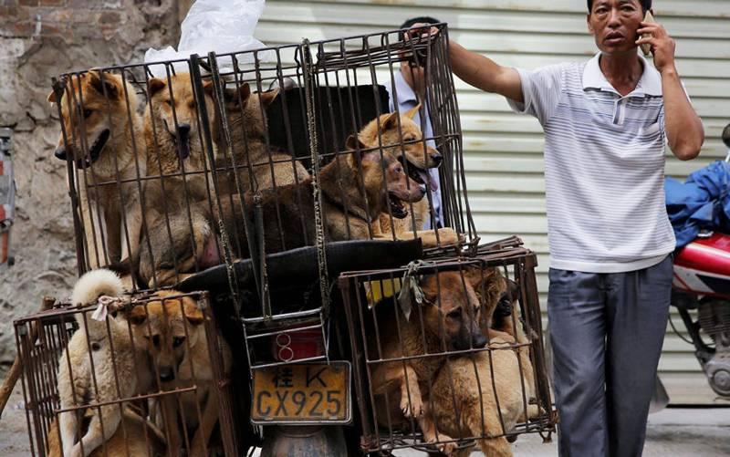 Псы с городских окраин: почему на россиян продолжают нападать безнадзорные собаки