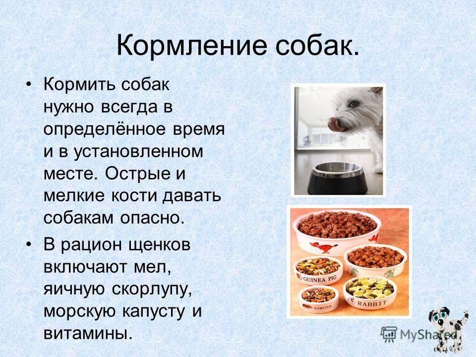 Чем кормить кота в домашних условиях, что бы он был здоров?