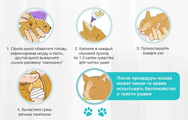 По каким причинам у собаки может быть частая икота