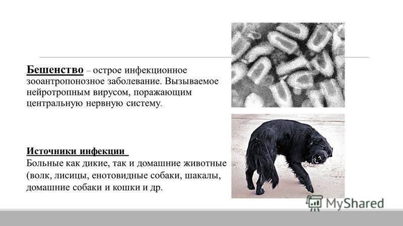 Зооантропонозы