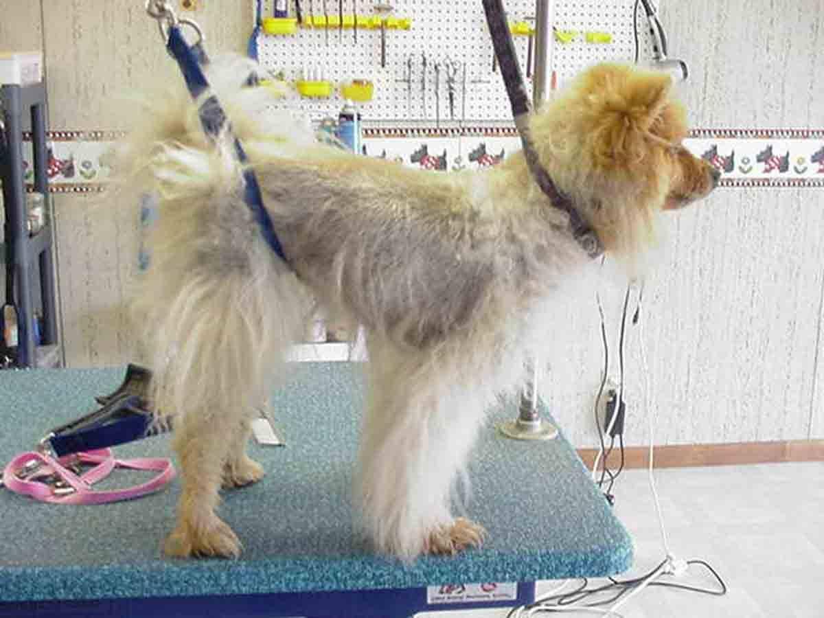 У собаки выпадает шерсть. причины, возможные заболевания, последствия для собаки