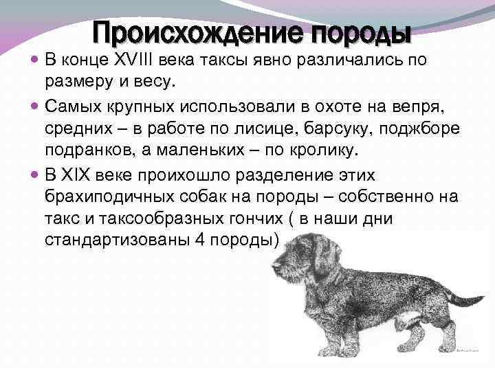 Как выглядит стандартная такса: описание особенностей питомца и как правильно выбрать щенка