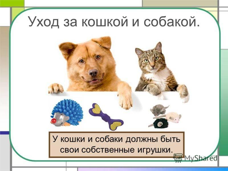 Какое животное можно завести дома?