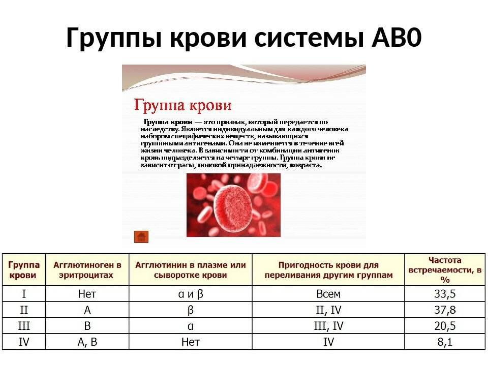 Группы крови у кошек: определение группы, совместимость