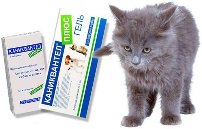 Инструкция по применению препарата «каниквантел» для лечения кошек: как давать питомцу таблетки от глистов?