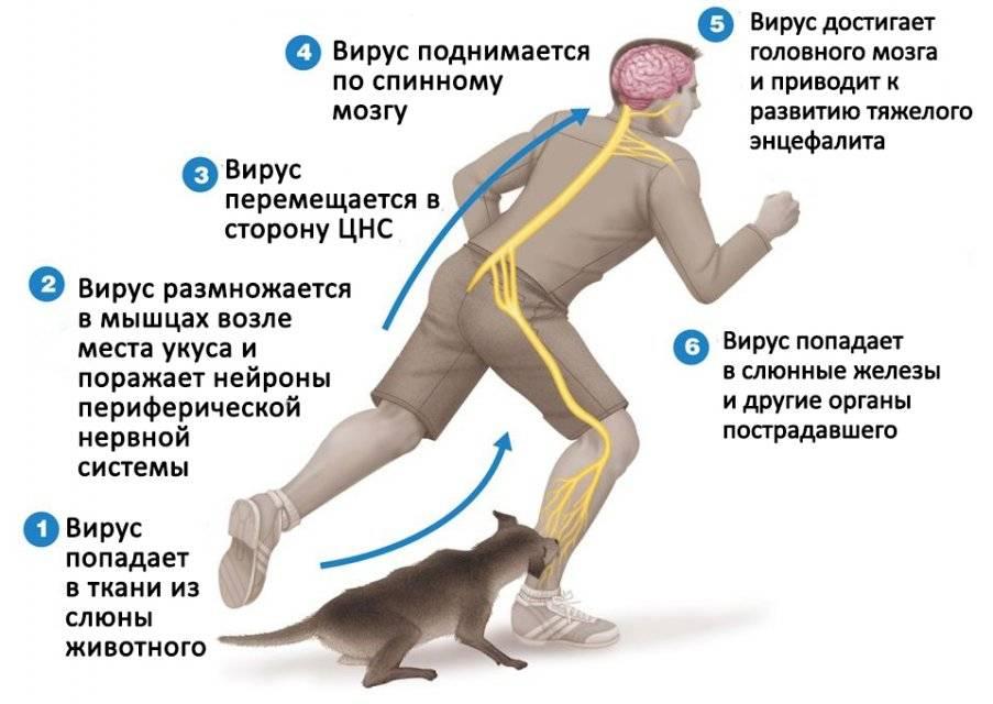 Болезни нервной системы у собак